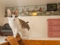 Kitty Luxury Suite