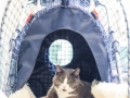 Kitty Stroller