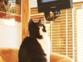 tv bird watching