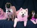go-pink-dogs-hi
