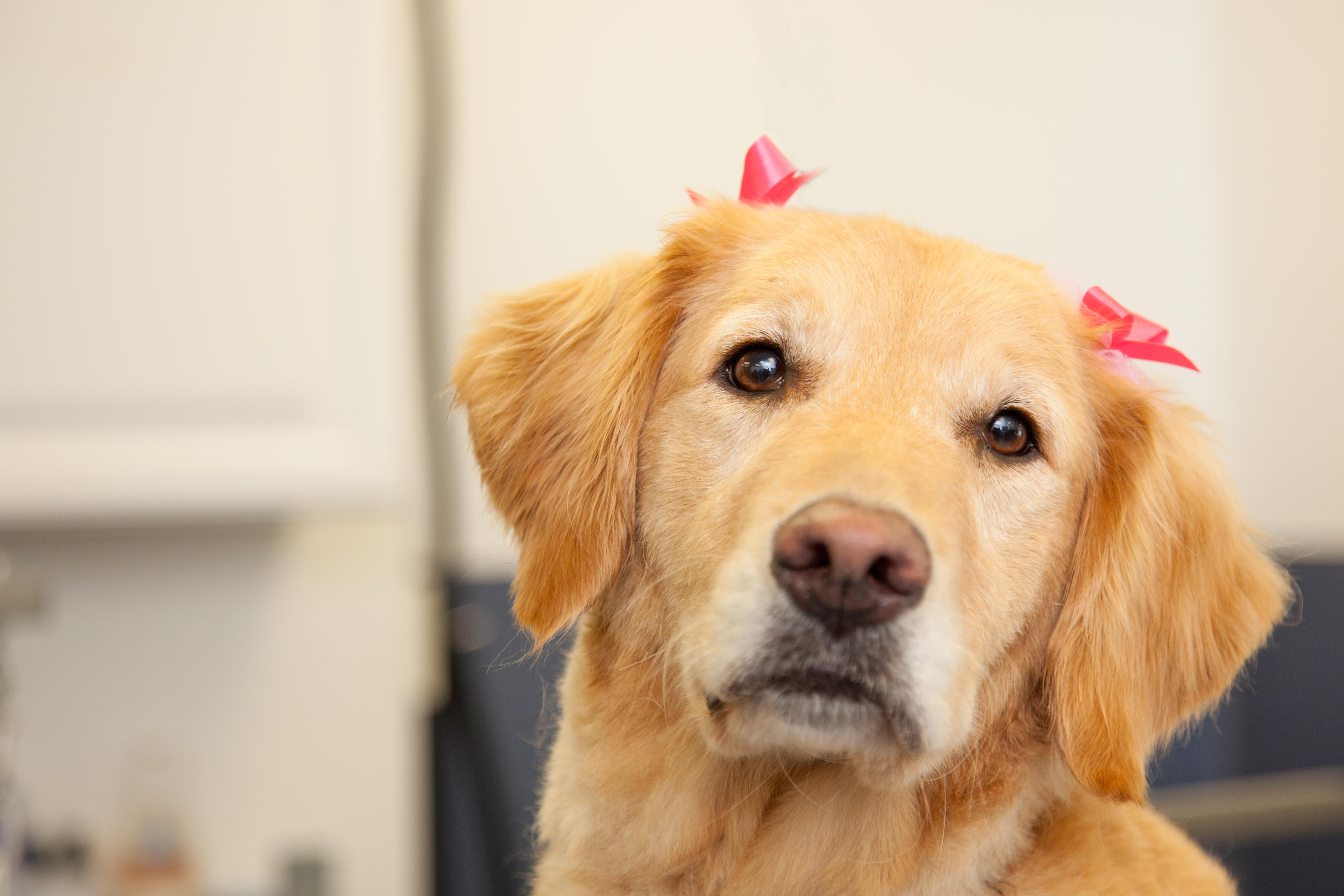 Dog grooming in morristown nj for A perfect pet salon
