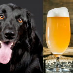 Dog Brewery