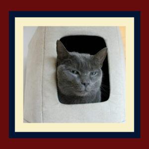 cat lodging