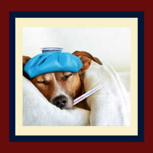 The Flu and Your Dog