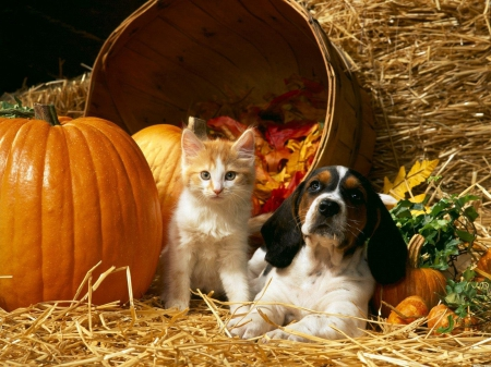 Cat Dog Pumpkin