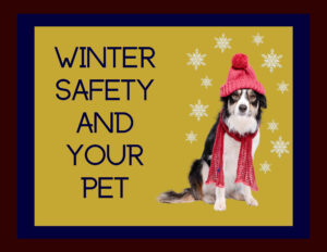 Winter Safety and Your Pet