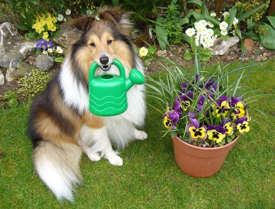 tips for a pet friendly garden morris animal inn