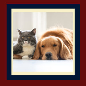 Can Dogs and Cats Be Friends?