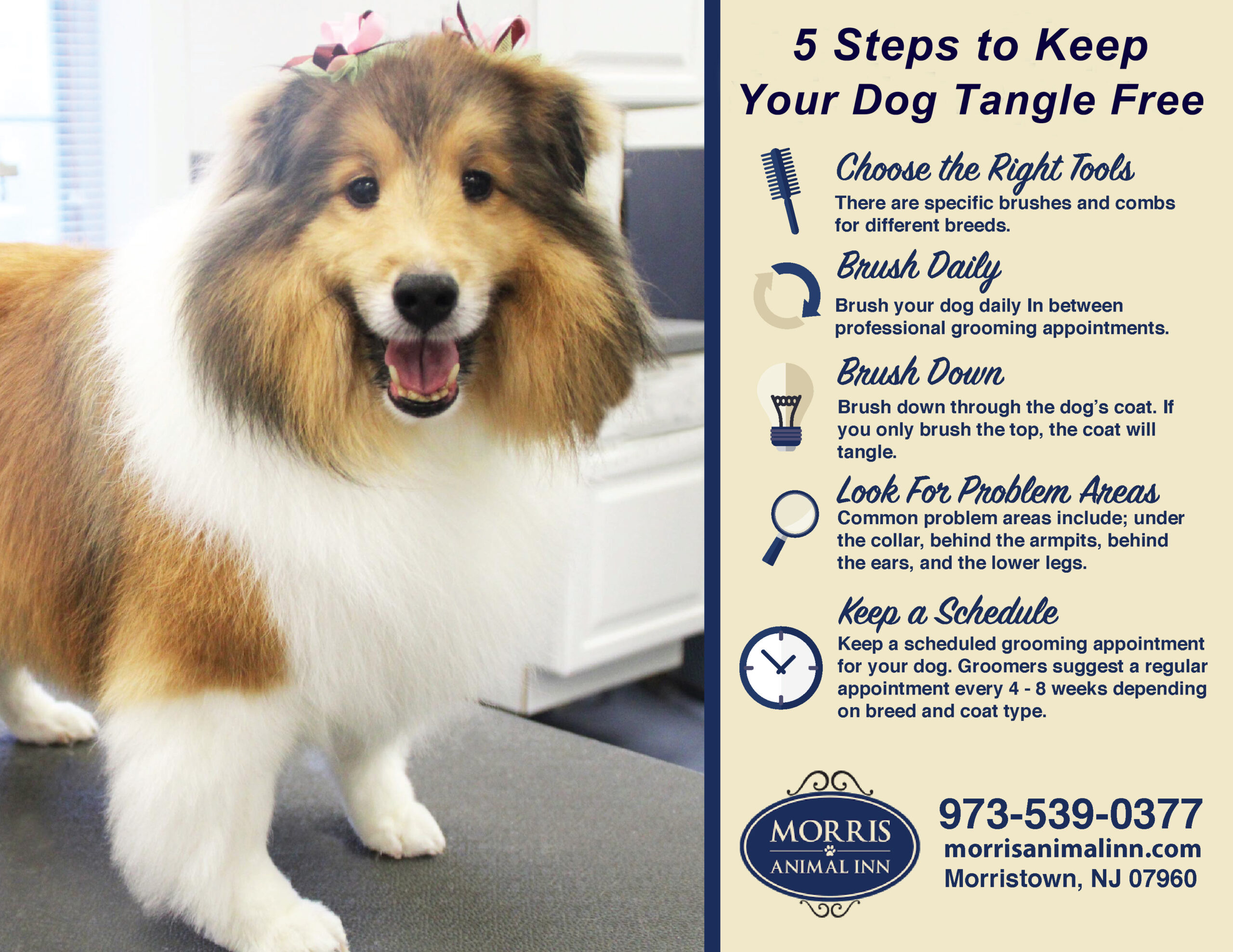 What Does A Dog Groomer Want You To Know Morris Animal Inn