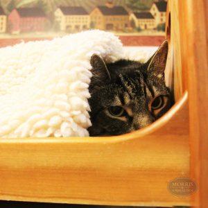 anti-social cat