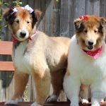 Well-groomed dogs from a Morris Animal Inn Dog Groomer
