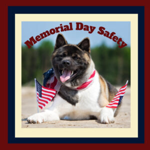 Memorial Day blog Morris Animal Inn