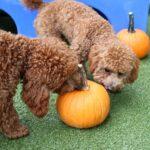 Pumpkin Patch[99240]