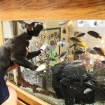 Fish tank is the antidote for cat stress at Morris Animal Inn