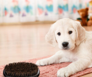 Three Tips to Help Prepare your Puppy for Grooming!