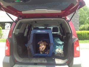 car rides - crate