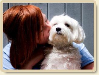 Staff kissing a dog
