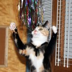 cat playing with a tinsel toys