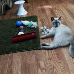 at playing with toys