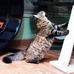 cat sharpening its claws on a scratcher