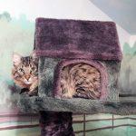 cat sitting in a cat tree