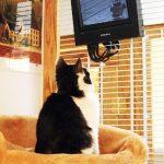 cat watching bird tv