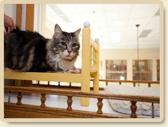 cat-boarding