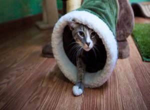 Cat in a tunnel