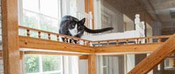 cat-luxury-suite