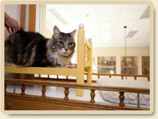 cat-special-needs