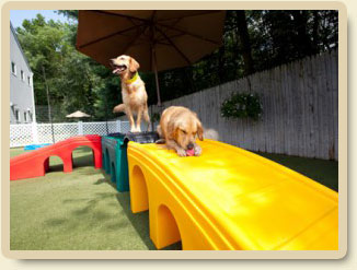 Dog Day Care Morristown Nj