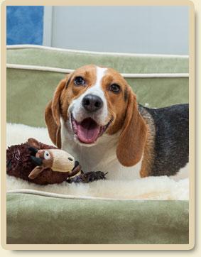 dog-lodging