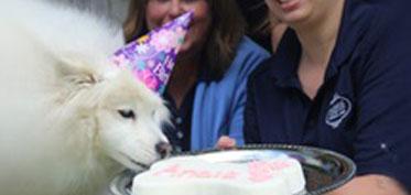 Dog licking a birthday cake