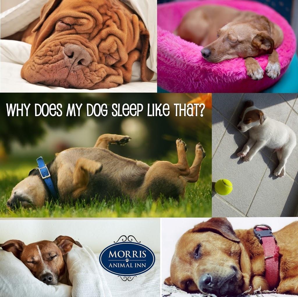 dog sleeping a lot