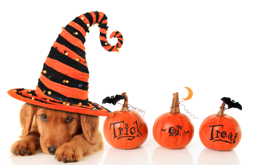 9 Halloween Safety Tips for Pets