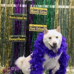 dog dressed up for mardi gras