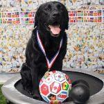 dog winning a prize