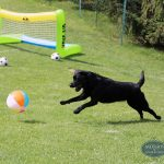 dog playing soccer