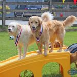 dogs with medals on slides
