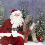 dog posing with Santa Claus