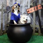 2 dogs sitting in a Halloween cauldron