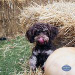 dog playing in a haystack