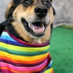 dog dressed up for Cinco de Mayo