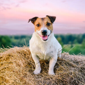 Dog-friendly Farms