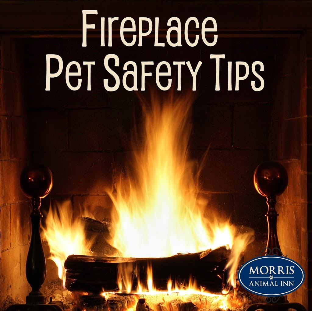 Pet Safety Around the Fireplace Morris Animal Inn
