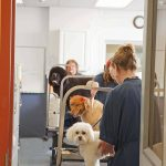 3 dogs in grooming stations at Morris Animal Inn