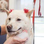 Dog getting a facial at Morris Animal Inn