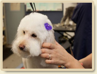 grooming-vaccine
