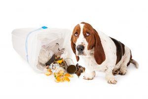 Dog in trash