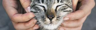 Cat getting a chin scratch